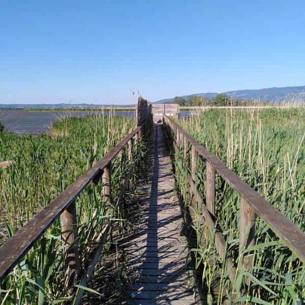 Weg zu einem Aussichtspunkt im Rheindelta direkt am See in Fußach 🌅🌾🌱 #bodensee ...