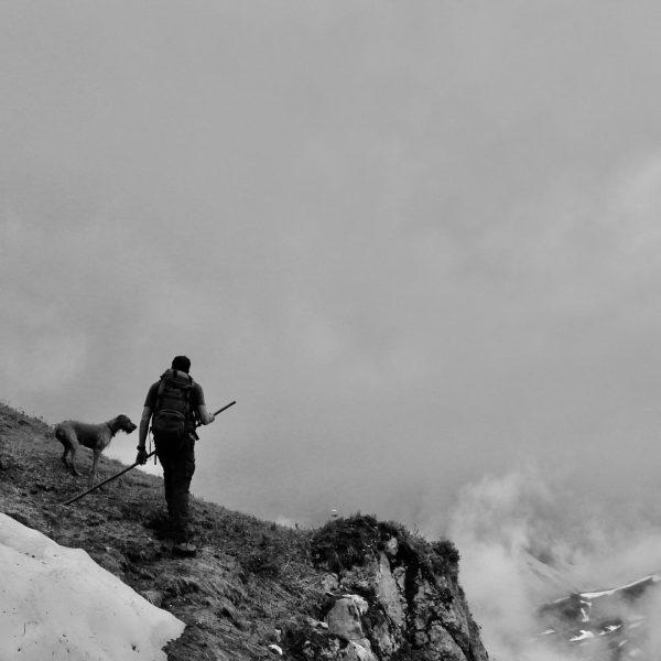Revierrunde 🐐 #wildlifephotography #wildlife #auroralech #nature #naturephotography #lechzürs #lechzuers #vorarlbergtourismus #jagdistleidenschaft #steinbock #gams ...