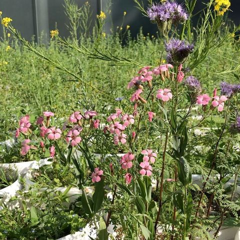 """In full bloom! Lois Weinbergers """"Mobile Garden"""" keeps growing revealing a broad variety ..."""