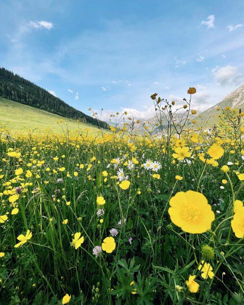 FLOWER POWER 🌼 #rotewandgourmethotel Zug, Vorarlberg, Austria