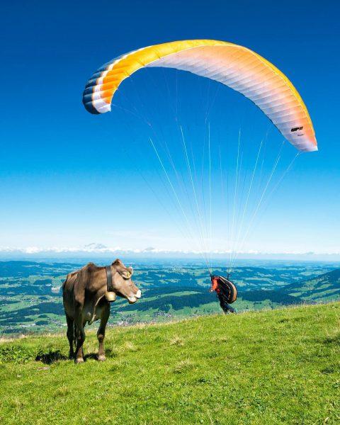 Paragleiter mit interessierter Zuschauerin… Paraglider with funny viewer #andelsbuch #niedere #bregenzerwald #vorarlberg #austria ...