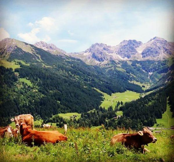 Heerlijk #Oostenrijk :-) #Kleinwalsertal #Alpen #Mittelberg #Kühe #koeien #Wildental #panorama