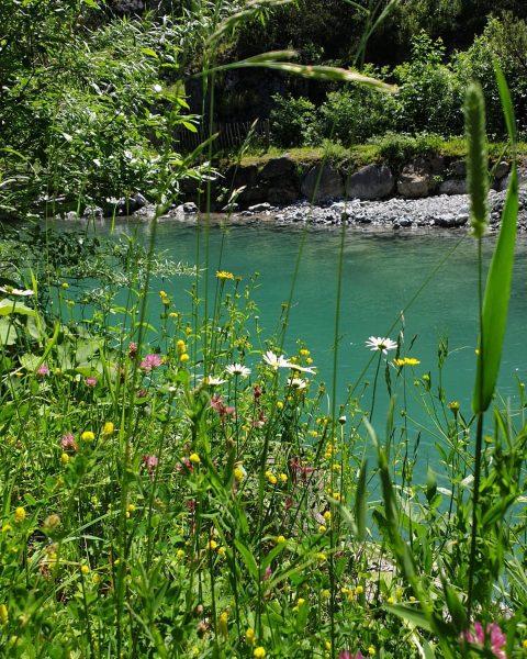 Im Biosphärenpark Großes Walsertal steht der Schutz der Natur und der Artenvielfalt an erster Stelle. 🐛🌼🦋 Vom...