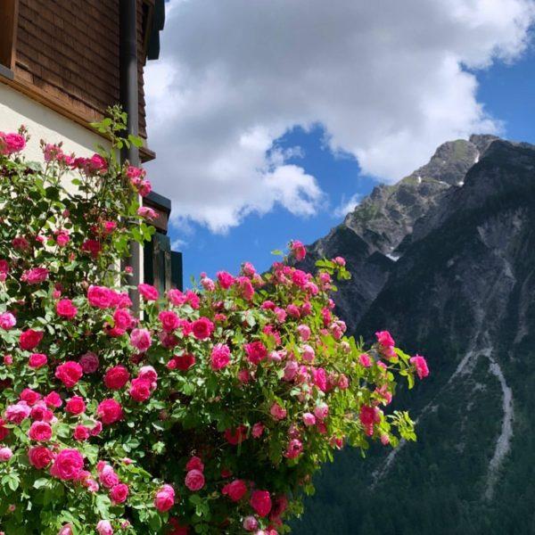 Unser schöner Rosenbusch auf der Terrasse bei Ferienwohnung 95😍🌹 #derkleinwalsertalerrosenhof #heimkommen #dabinichgern #zwaergbartli ...