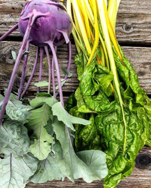 BODEN:schätze ... Sonne & Sommerregen lassen unser Gemüse wachsen! Wir ernten täglich in ...
