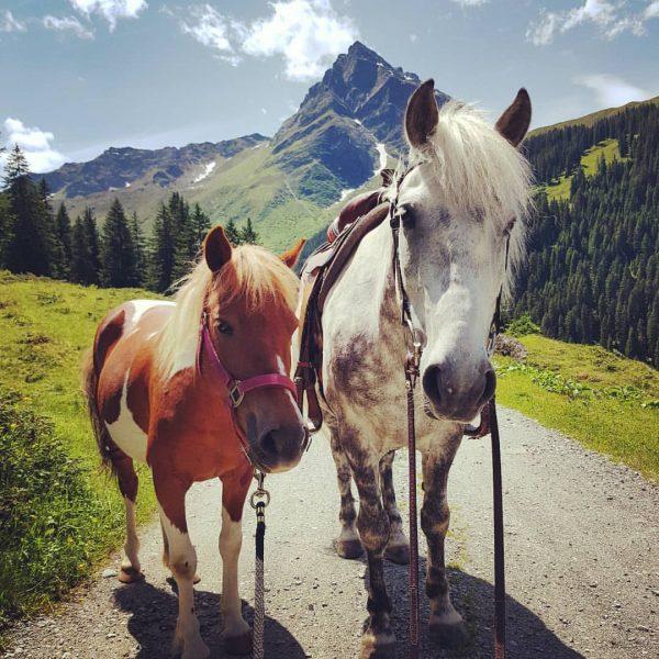 🧡Amrei+Adi💚 Unsere zwei Großen freuen sich auf große Reiter #vergalden #gargellen #montafon #meintraumtag #westernreiten #indenbergen Vergalden, Vorarlberg,...