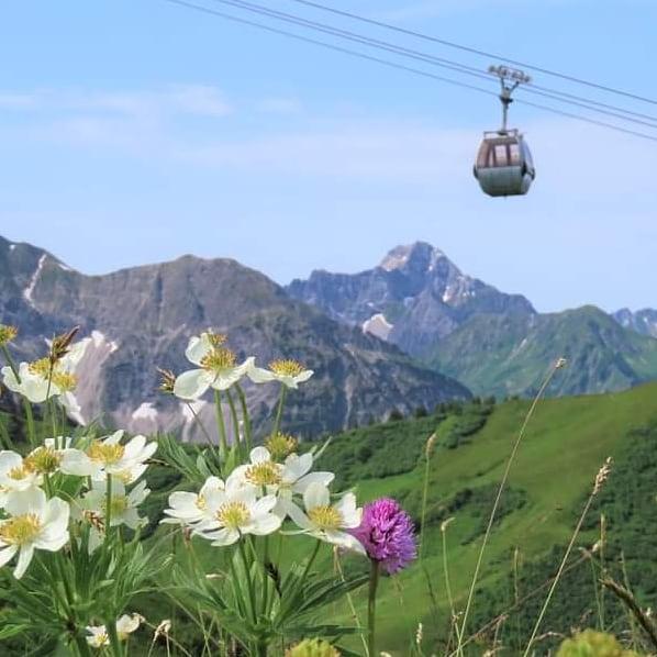 #Kanzelwandbahn #Kleinwalsertal vandaag. #Traumhaft #Bloemen #Mittelberg @okbergbahnen #Kanzelwand