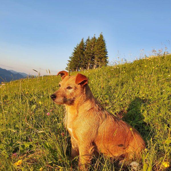 Den Sonnenuntergang genießen 🐕🐮💚🌞🍀 #glücksgenussalpewildgunten #mellaubregenzerwald #mellau #alp #hundeliebe #sonnenuntergang