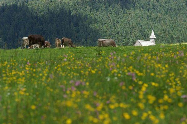 Unser Vorsäß Schönenbach liegt auf 1.050 m Seehöhe und ist ein Kleinod. Von ...