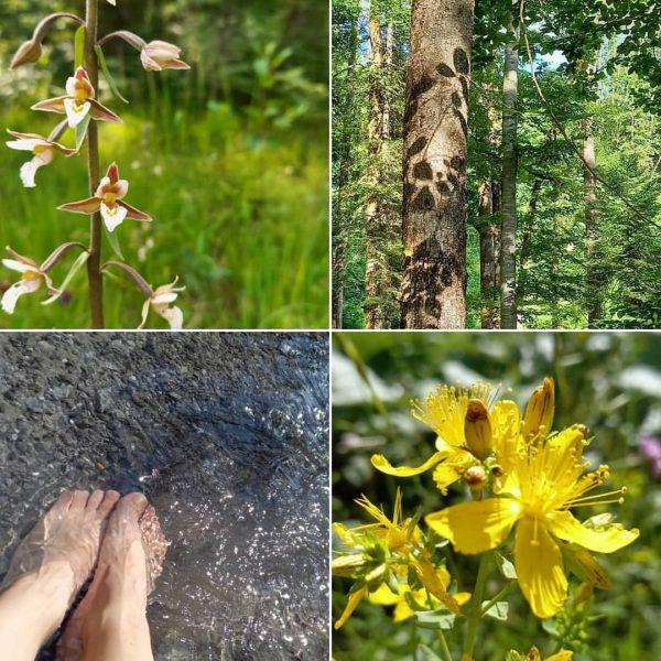Den Sommer genießen... #grosses_walsertal #grosseswalsertal #bergsommer #bergsteigerdörfer