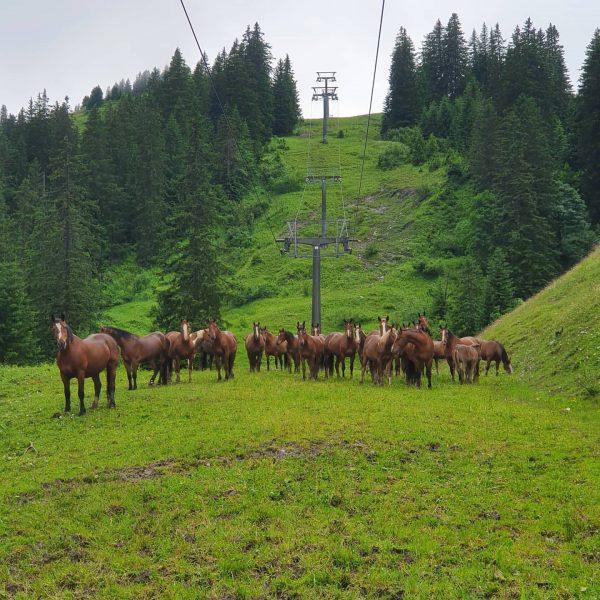 Doofes Regenwetter 🐴🌧☔ #glücksgenussalpewildgunten #mellaubregenzerwald #mellautourismus #mellau #pferd #regenwetter #zalp
