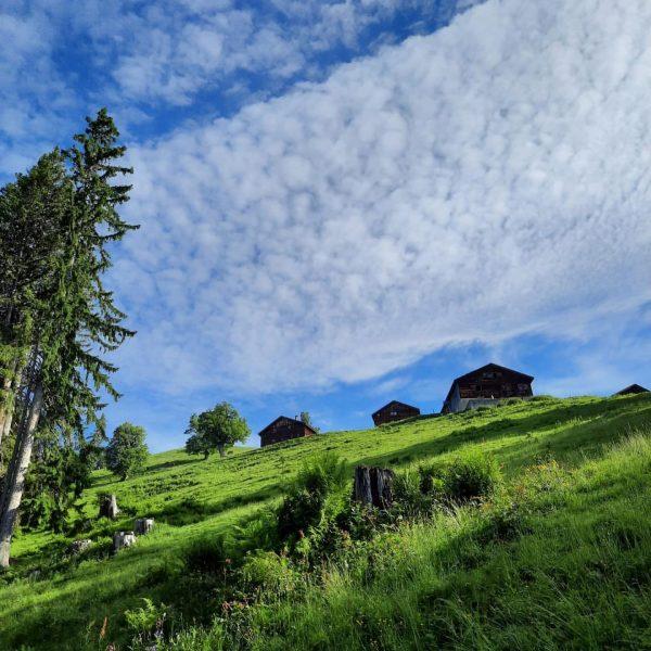 Ein weiterer herrlicher Sommertag - eine weitere herrliche Wanderung mit wunderbaren Ausblicken ☀️🌿 🥾Plansott Alpe - Sentum...