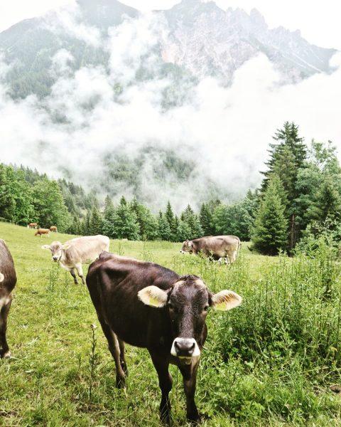 #brandnertal #bludenz #österreich #berge #wandern #wanderlust #ruhe #regen #abindieberge #austria #urlaub #holiday #vacationvibes ...