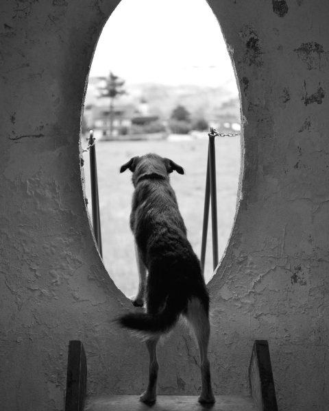Aussicht im Oval #betonei #handwerkskunst #bregenzerwald #bregenzerwälderhandwerk #werkraumbregenzerwald #kulturundhund #neugierigerhund Andelsbuch