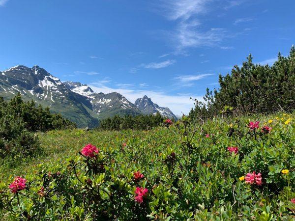 Der Patteriol ist ein 3056 m ü. A. hoher Berg in der Verwallgruppe ...
