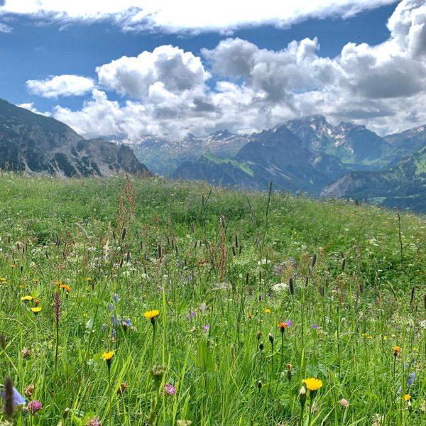 Heidi, Heidi, deine Welt sind die Berge… 🏔 #berge #alpen #wunderschön #natur #bergwiese ...