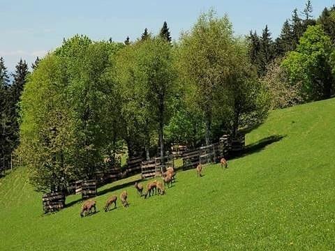 Willkommen zu unserem Alpenwildpark Alphabet. Hier kann man jeden Tag viele neue Sachen ...
