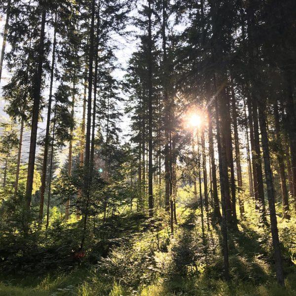 Guten Morgen aus der @oase.k77 #bogenschießen #escapegame #naturerleben #einfachdraussen