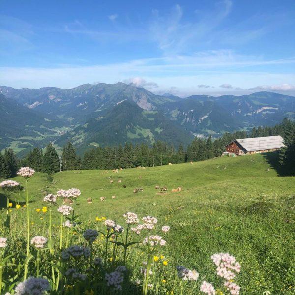 Zwischen Schnepfau und dem Hirschberg liegt die Alpe Unterer Hirschberg, welche von dem jungen Älplerpaar Kathi &...