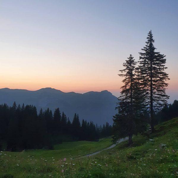 Abendstimmung auf Wildgunten 💚🍀 #glücksgenussalpewildgunten #abendstimmung #sonnenuntergang #alp #mellau #mellautourismus #mellaubregenzerwald Alpen Wildgunten