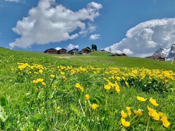 Durch die schneereichen Winter und den schonenden Umgang mit der Natur bleiben die Bergwiesen am Arlberg auch...
