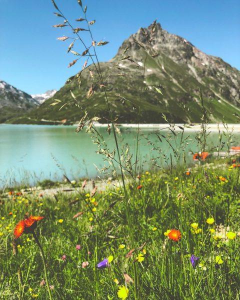 Beim Wandern in den Alpen sind sie stille Begleiter und schmücken den Weg ...