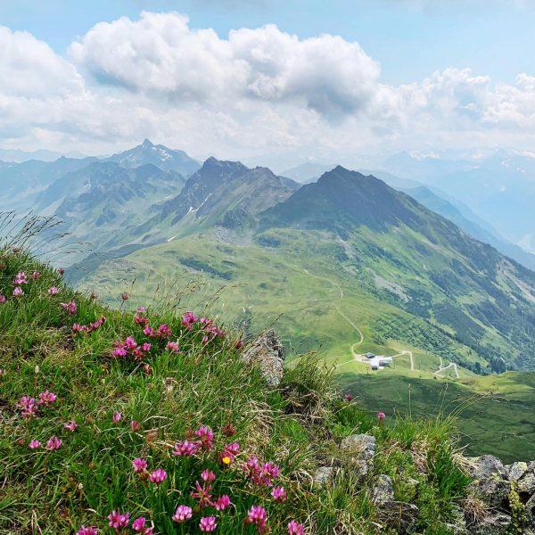 🌿🌸📗Laut Pflanzen-Lexikon wachsen die purpurroten Alpenrosen bis zu einer Seehöhe von 2.000 Metern. Gestern haben wir sie...