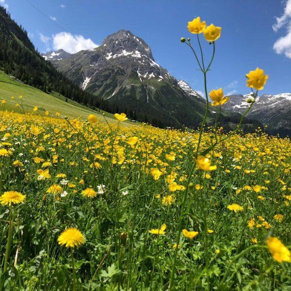 Wie wundervoll sind diese Almwiesen. Kurz vor der ersten Mahd in Lech. #lech #naturpur🌳 #mountainslovers Lech Zürs...