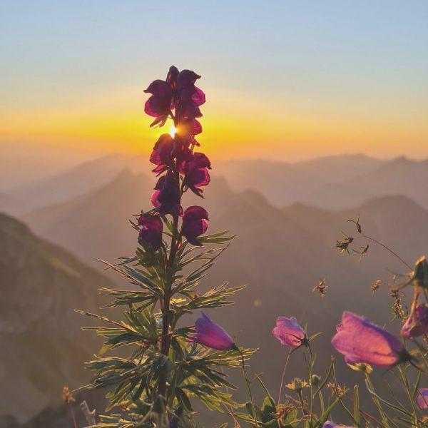 Was ist für dich das optimale Sommergefühl in den Bergen? Wir lieben die ...