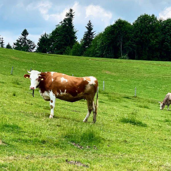Die Großen 6 am Eichenberg. 🐄 🐴 🐐 🐑 🐷 🦌 Von Kühen mit Hörnern, über Noriker...