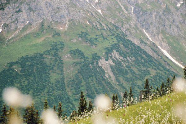 Sommerstimmungen. • • • • • • • • #summer #flowers #nature #hiking #ski #snow #lech #lechamarlberg...