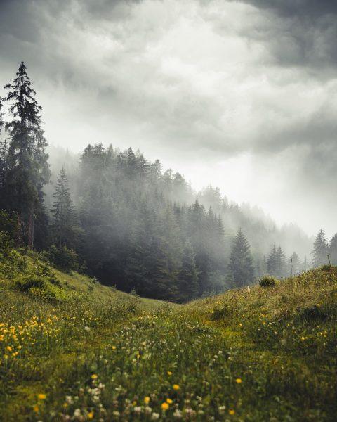 Auch bei schlechtem Wetter kann man schönes erleben 🌧 . . .. . ...