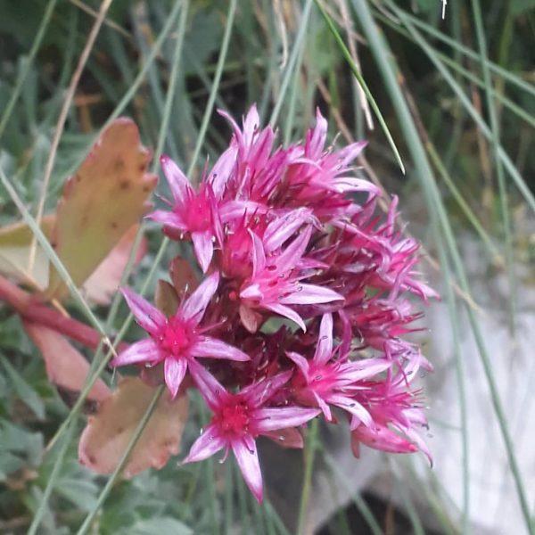 Bergblumen, immer ein Hingucker Heute machte ich trotz des regnerischen Wetters eine kleine ...