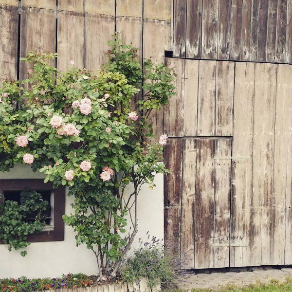#bauernzacherl #natur #garten #rosen #fotografie #bludenz #wunderschön @bludenzstadt @alpenstadt_bludenz