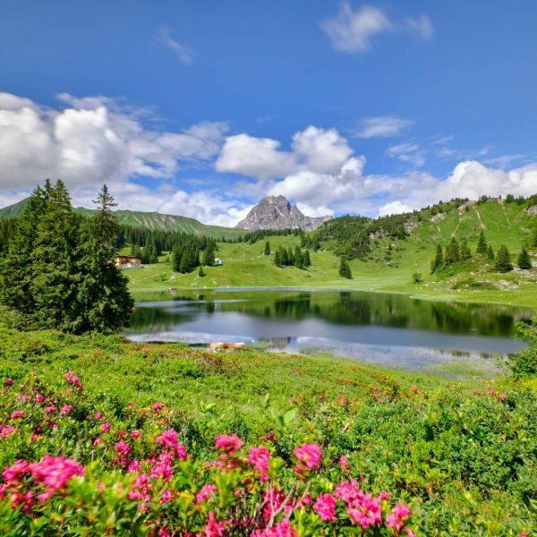 Eine Wanderung zum Körbersee empfiehlt sich zur Blütezeit der Alpenrosen ganz besonders. 📸 ...