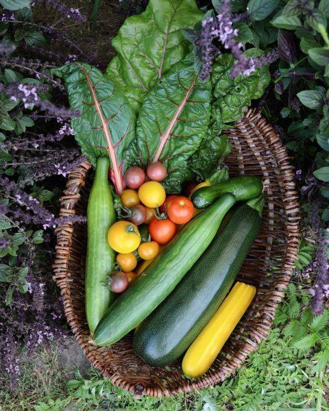 Wenn der Tag mit Ernten im Garten startet, schöner kann er kaum starten! Hab heute die ersten...