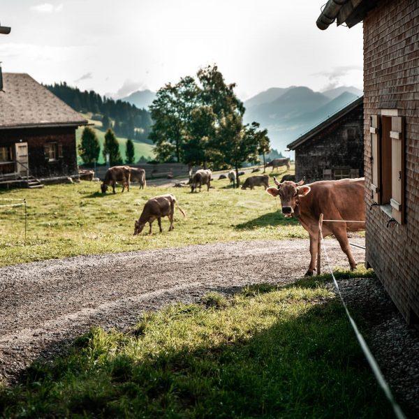 Leben wo andere Urlaub machen. 😍🤍 #6850dornbirn #dornbirn #visitvorarlberg #visitaustria #bodenseevorarlberg #vorarlberg #visitdornbirn ...