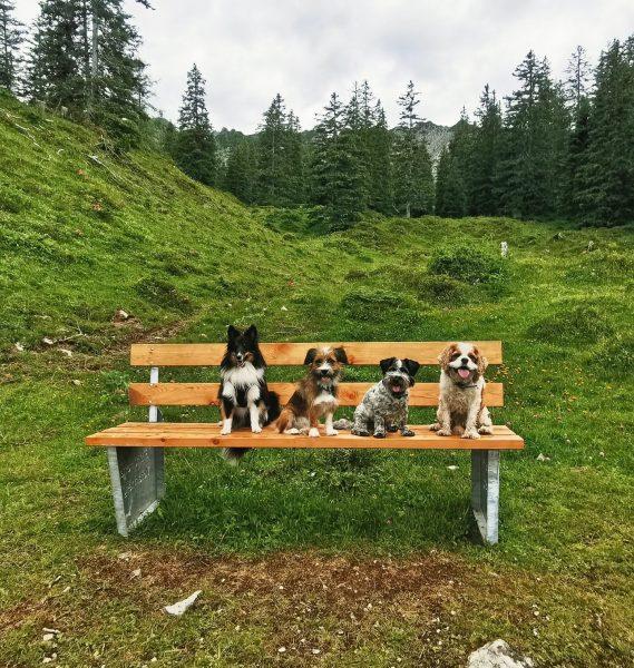 ⛰️🐶🥰 #schönwars #wandern #berge #bergliebe #monday #goodtimes #mountains #dogs #happydog #happyme #brandnertal #vorarlberg ...