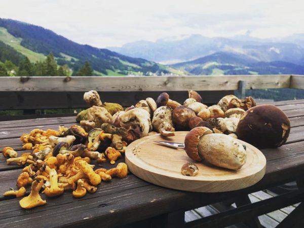 #hausjägerblick #pilzesammeln #meinsibra #heimat #genießen #natur #bregenzerwald #eierschwammerl #steinpilze #glück #wohnenwoandereurlaubmachen #besterausblick Sibratsgfäll, ...