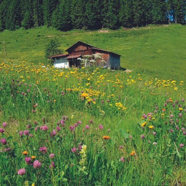 Farbenfroh & einzigartig ist die Natur in den Bergen ☀️🌼🌸 #naturzeit #altekrone #hotelaltekrone ...