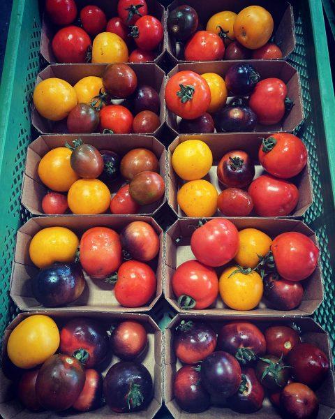 Das lange Warten hat ein Ende - es gibt wieder frische Tomaten 🥰 ...