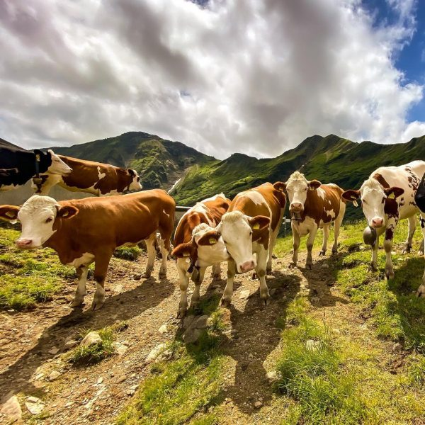 Some local girls I met in the Alps….. #alps #alpen #allgäu #allgäueralpen #allgäuliebe ...