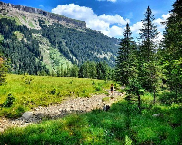 About yesterday 🌿💚🍹 #amstaff #amstaffbully #französischebulldogge #bully #hikingwithdogs #hiking #kleinwalsertal #austria #ontop #rescuedog ...