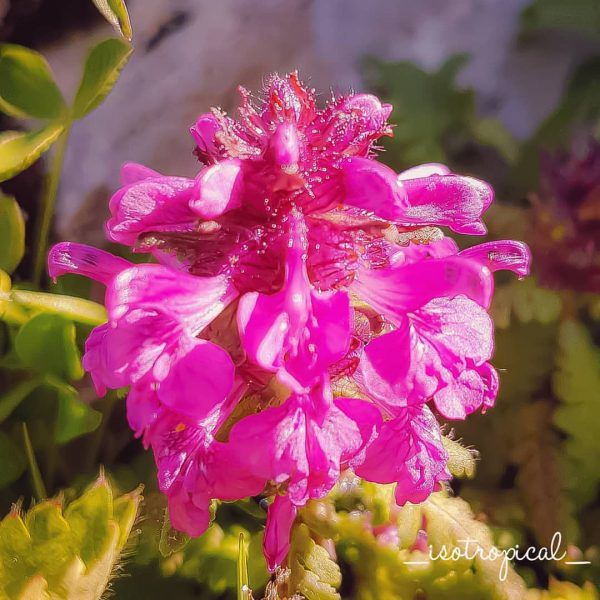 Do you know the name of this flower? Please tell me if you ...