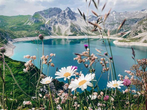 Alpenblumen 🌸 #österreichliebe 📍Lünersee 🇦🇹 📸 via @mzansis_wanderlust Lünersee