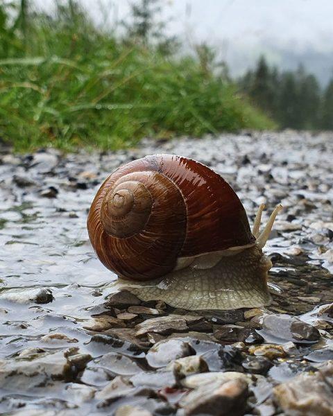 🇦🇹 Spannender dan dit werd het gisteren qua wild niet.....🐌 - - #wildlifephotography ...