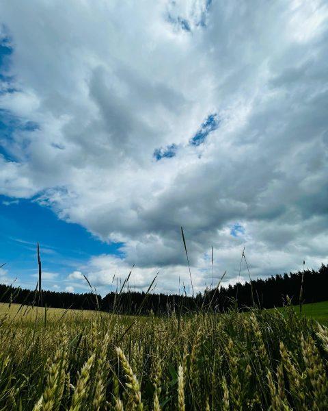 Fotoshooting Blattjagd Schwäbische Alp #blattjagd #jagdistleidenschaft #rehbockjagd #schwäbischealb #gauselfingen #gammertingen #krumbachbregenzerwald Baden-Württemberg, Germany