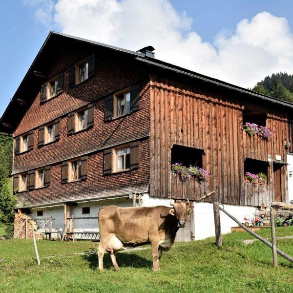 Die Alpe Kretzboden in Bezau ist ein Familienbetrieb und wird von Familie Moosbrugger ...