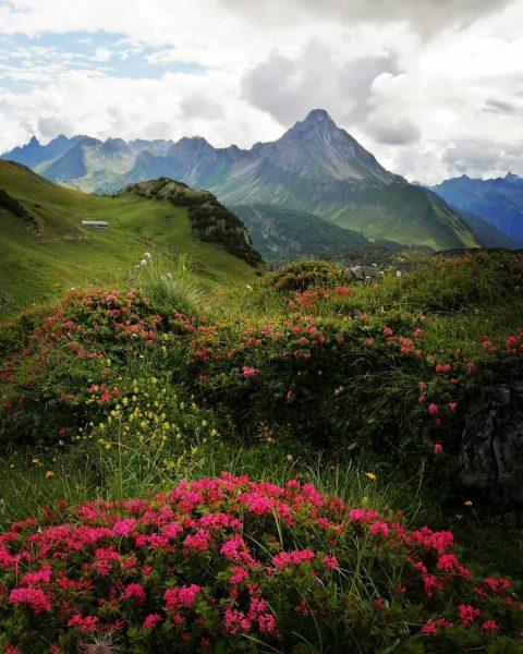 Alpenrosenblüte im Bregenzerwald Blick Richtung Biberkopf #alpenrosen #alpenrosenblüte #hiking #wandern #wanderung #erlebnis #bergliebe ...