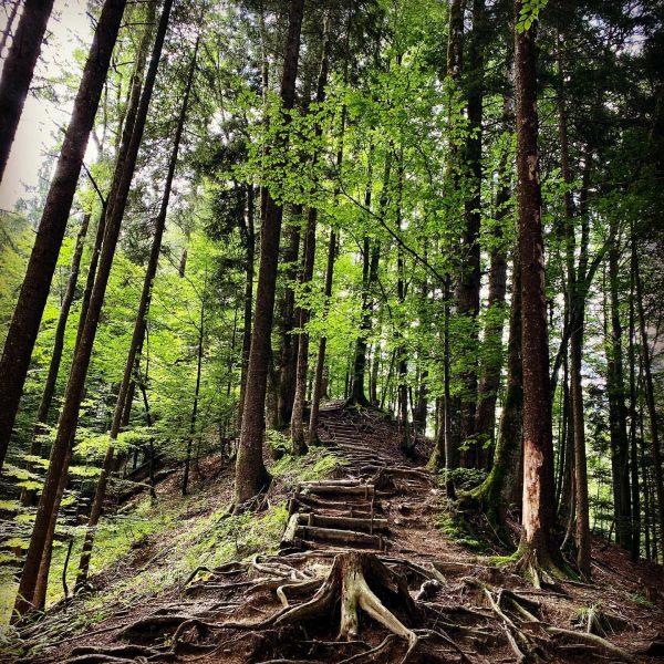 Wunderschöner Wurzelpfad 🌳 #natur #nature #wandern #hiking #wanderlust #berge #alpen #österreich #alps #landscape ...